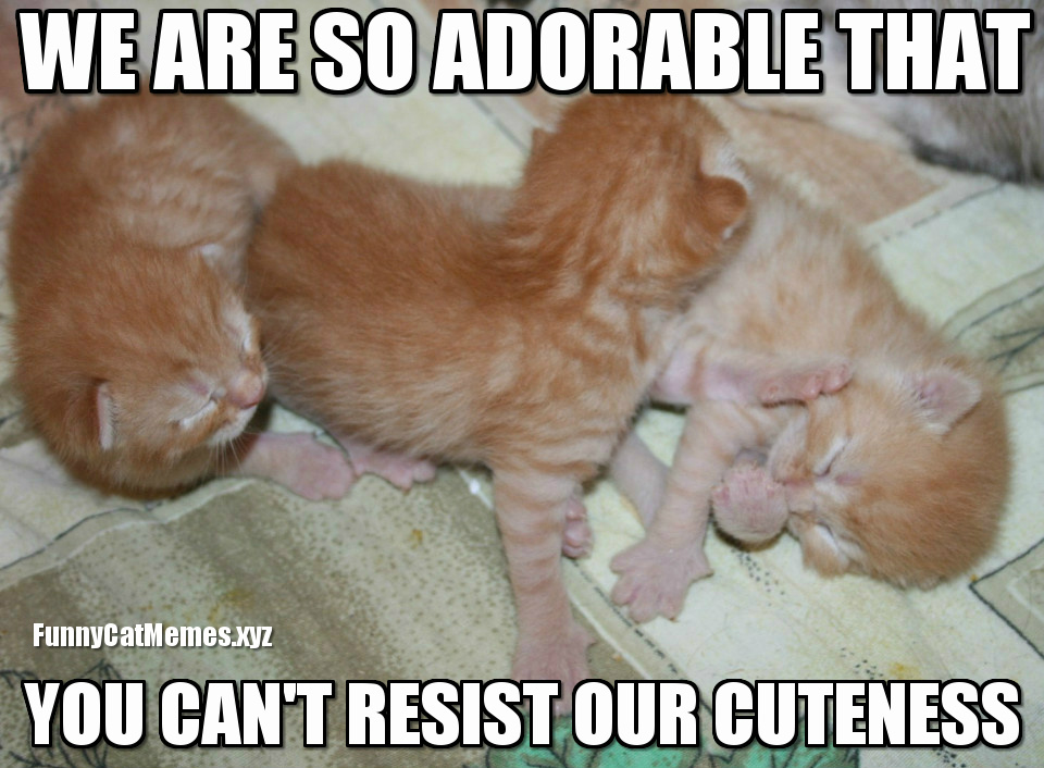 Cute kittens meme Funny Cat Memes when you can't resist cuteness funny kitten meme,Resist Meme