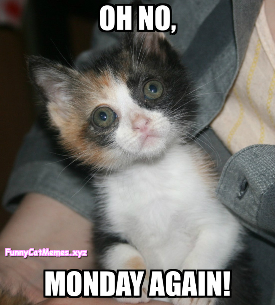 Kittens Don't Like Mondays