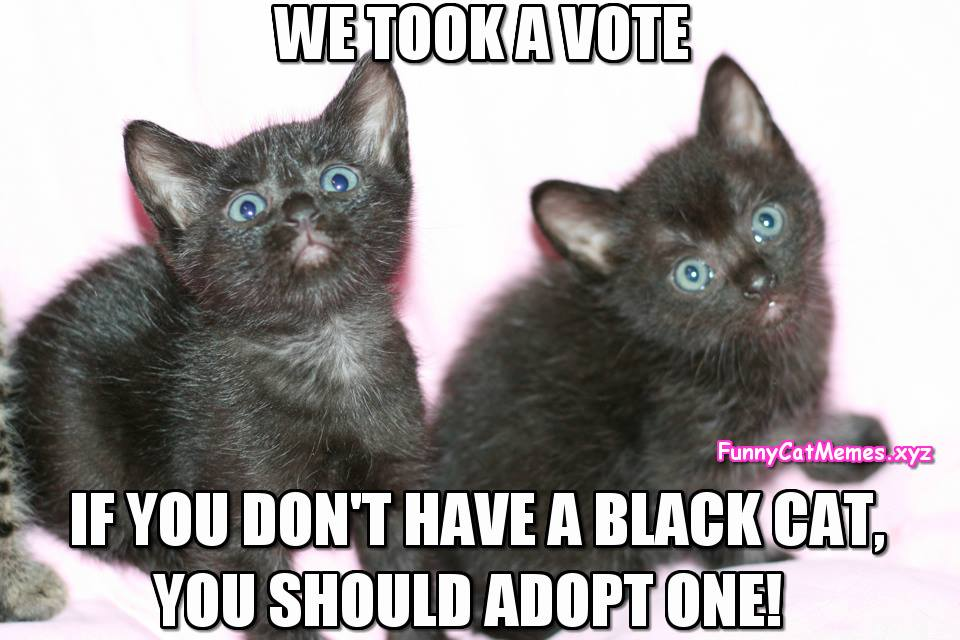 Kittens Took A Vote